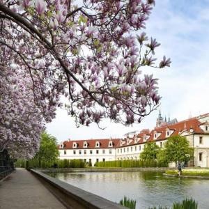 kvetouci-magnolie